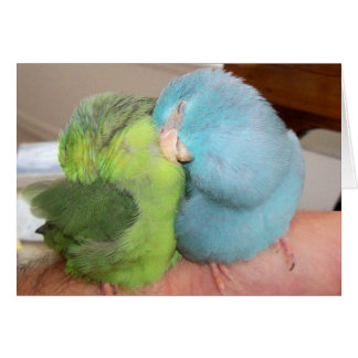 Parrotlet love birds 'safe in your arms' greeting  card