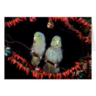 ParrotletsHoliday Card