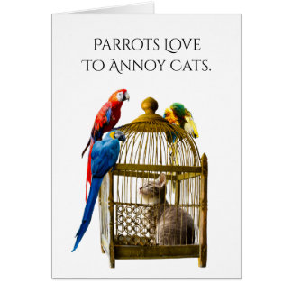 Parrots Annoy Cats Friend Greeting Card