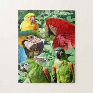 Parrots - Birds of a Feather Puzzle