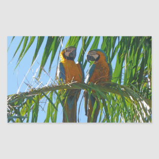 Parrots- Blue and Gold Macaws Sticker