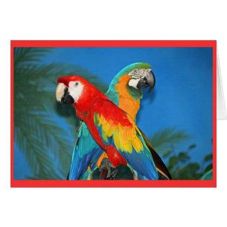 Parrots Card
