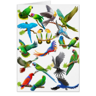 Parrots Galore Card