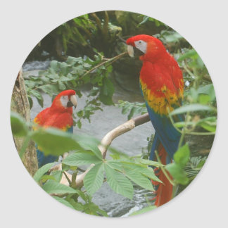Parrots - scarlette macaw stickers