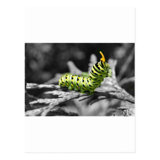 parsley caterpillar black and white postcard