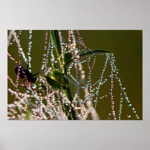 Partie d'araignée affiches