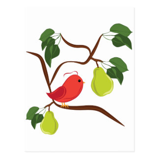 Partridge In Pear Tree Postcard