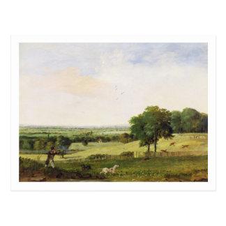 Partridge Shooting (oil on millboard) Postcard