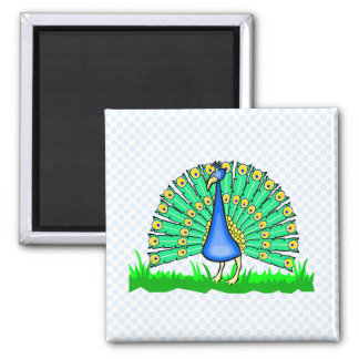 Pascal Peacock Square Magnet