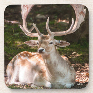 Passe-partout mounting photo stag under wood coaster