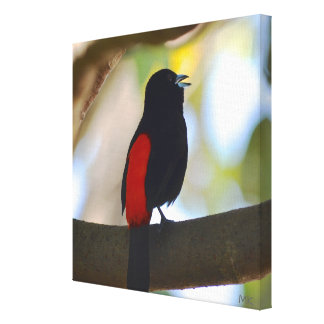 Passerinis Tanager Costa Rican Bird on Canvas