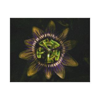 "passiflora 10""x8"" / 25x20 cm canvas print"