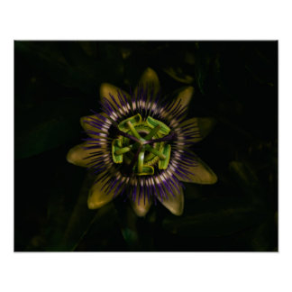 "passiflora 20""x16"" / 50x40 cm poster"