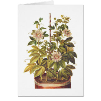 Passiflora incarnata card