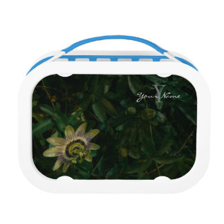 passiflora lunchboxes