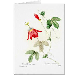 Passiflora racemosa card