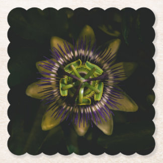 passiflora scalloped square paper coaster