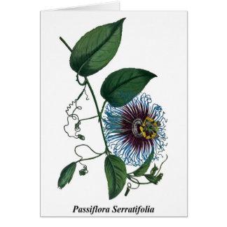 Passiflora Serratifolia Card