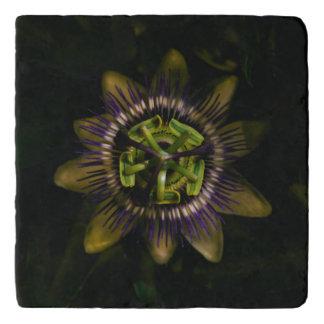 passiflora trivet