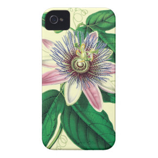 Passiflora vintage image iPhone 4 cover