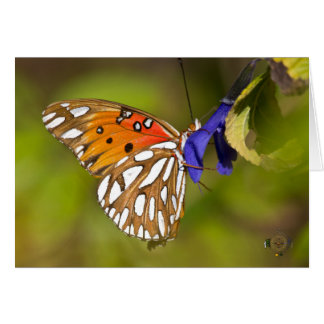 Passion Butterfly Embrace Lee Hiller Photography Card