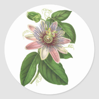 Passion flower classic round sticker