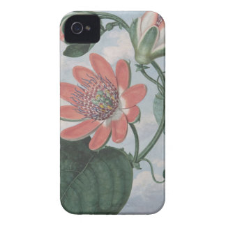 Passion Flower iPhone 4 Case-Mate Case