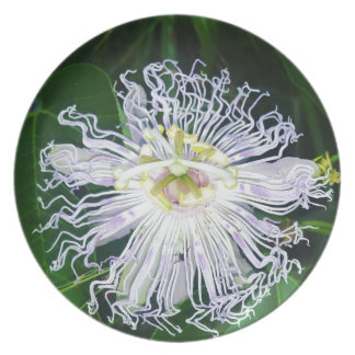 Passion flower plate