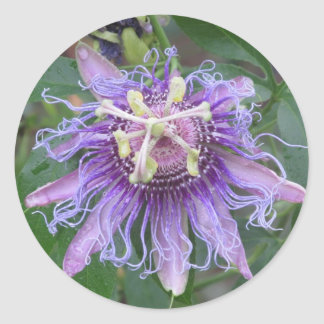 Passion Flower Round Sticker