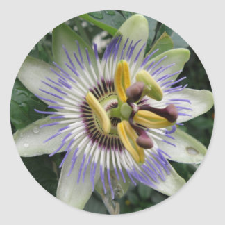 Passion Flower Sticker