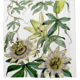 Passion Flower Vintage Print