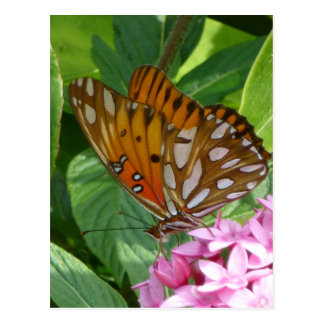 Passion Vine Butterfly Postcard