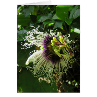 Passionfruit Blossom Card