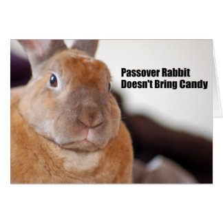 Passover Rabbit Says Card