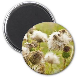 past blossoming thistle 2 inch round magnet