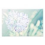 Pastel Flowers Photographic Print