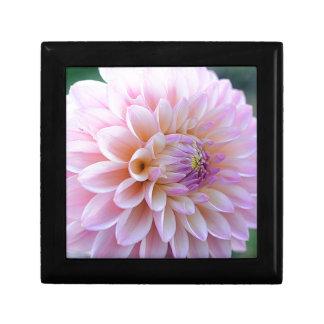 Pastel Hued Dahlia Gift Box