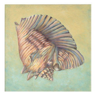 Pastel Large Conch Shell Acrylic Print