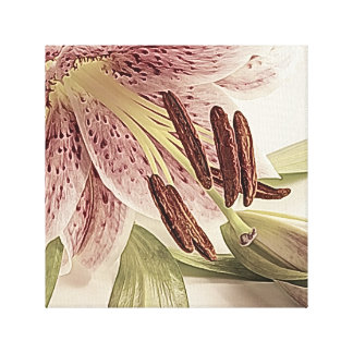 Pastel Lilly. Canvas Print