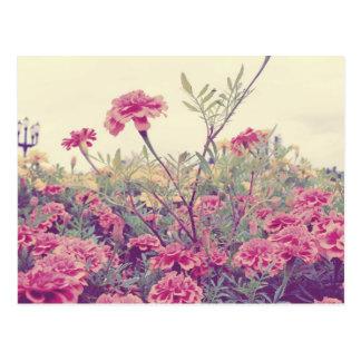 Pastel Marigolds Postcard
