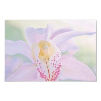 Pastel Orchid Photo Print