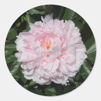 Pastel pink peony classic round sticker