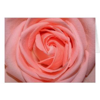 pastel pink rose card