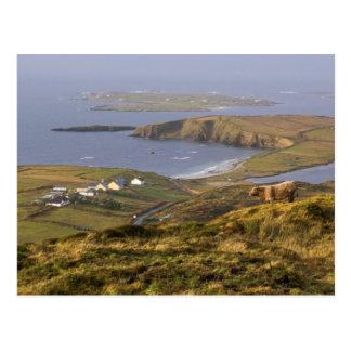 Pastoral Irish Coast Postcard