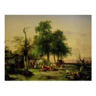 Pasture land postcard