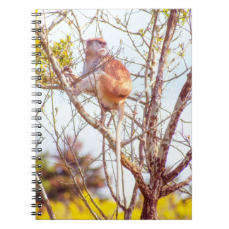 Patas is Up a Tree Spiral Notebook