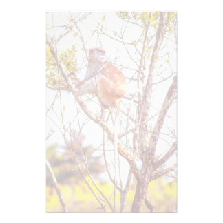 Patas is Up a Tree Stationery