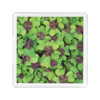 Patch of Four Leaf Clover (Sorrel) after Rain Acrylic Tray