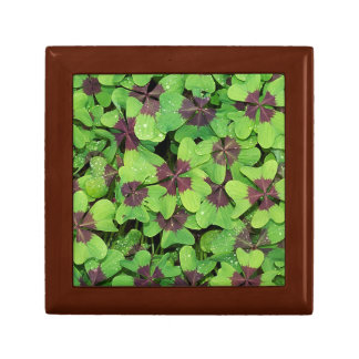 Patch of Four Leaf Clover, Sorrel after Rain Gift Box