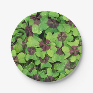 Patch of Four Leaf Clover, Sorrel, with Dew Paper Plate